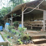 Kandang kambing terintegarsi dengan instalasi pengolahan biogas