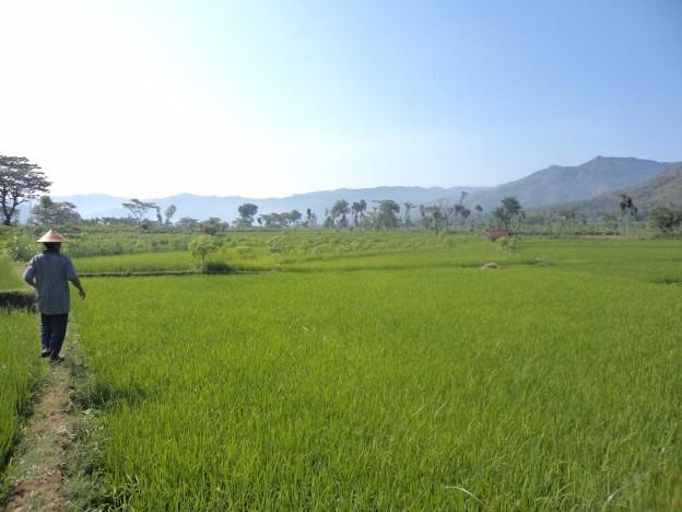 Lahan Pertanian di Kecamatan Giriwoyo, Wonogiri